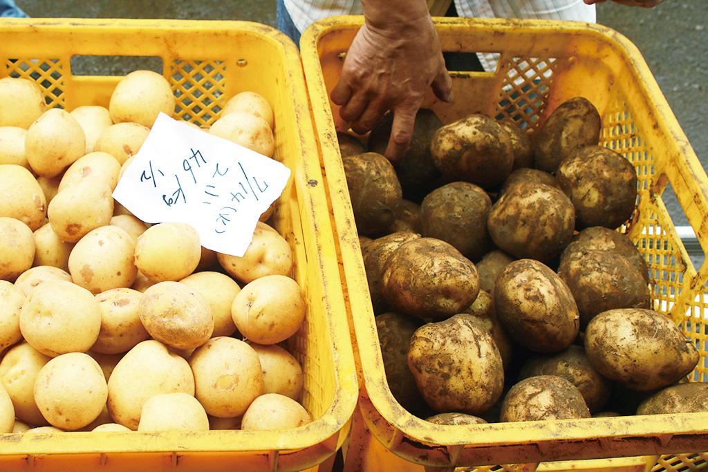 普通のジャガイモと通常の3〜4倍近い大きさのジャガイモ